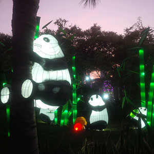 Открылся самый большой сияющий парк в мире – Дубайский Garden Glow