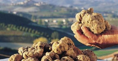 Родина белых трюфелей Сан-Миниато – один из очаровательных городов-курортов Тосканы